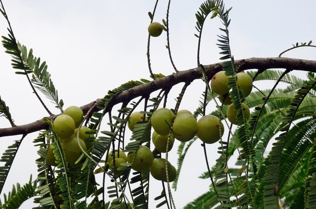 Indian gooseberry whole foods